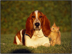 Dogs And Cats Screensavers