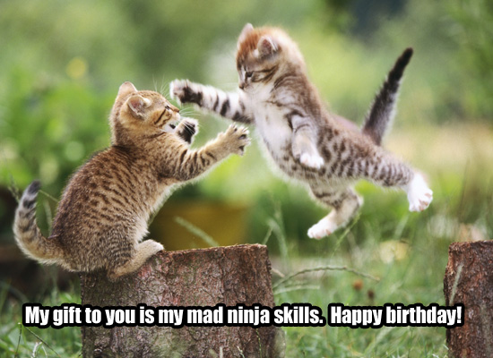 Silly Kitty Birthday eCard. Meow! Send a friend or family member a funny,