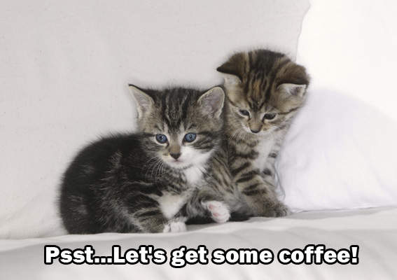 Coffee Kitties