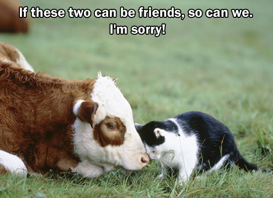 Sorry Cat And Cow