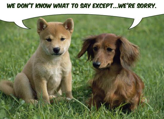 Sorry Puppies eCard