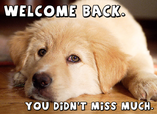 welcome back with dog