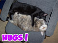 Hugs! - Cute Cat