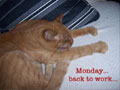 Monday - Cute Cat