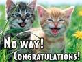 Congrats Cats