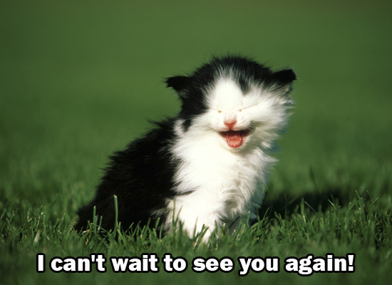 Express your excitement for you and your friend's reunion with this cute cat
