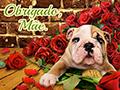 Bouquet Cachorro