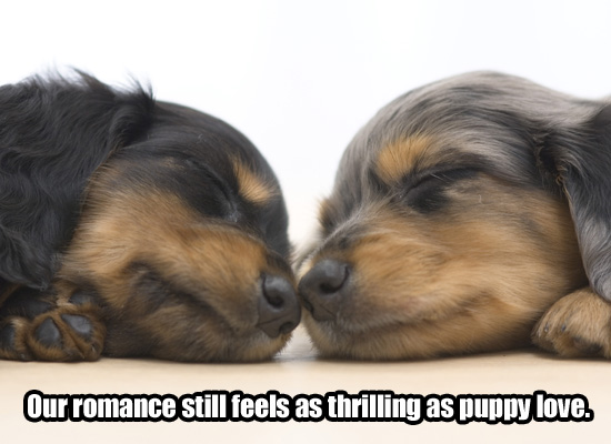 myfuncards puppy love send free love u0026amp dating ecards loving puppy love 550x400